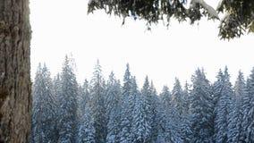 Snö faller framme av solljus Snöflingor i Forest Snow som täckas för att sörja träd i berg under vinter Snöig morgon i na arkivfilmer