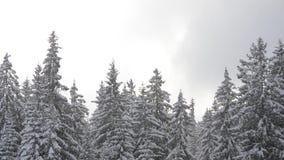 Snö faller framme av solljus Snöflingor i Forest Snow som täckas för att sörja träd i berg under vinter Snöig morgon i na stock video