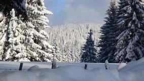 Snö faller framme av solljus Snöflingor i Forest Snow som täckas för att sörja träd i berg under vinter Snöig morgon i nat lager videofilmer