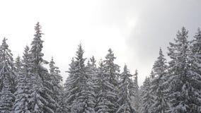 Snö faller framme av solljus Snöflingor i Forest Snow som täckas för att sörja träd i berg under vinter Snöig morgon i nat stock video