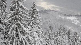 Snö faller framme av solljus Snöflingor i Forest Snow som täckas för att sörja träd i berg under vinter Snöig morgon i nat arkivfilmer