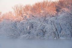 Snö flockades träd, Kalamazoo flod Arkivfoto