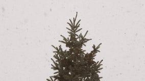 Snö flyger i slowmo mot bakgrunden av granen stock video