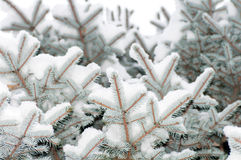 Snö ligger på en filial Arkivfoto