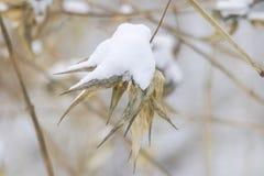 Snö och bambu Arkivbilder