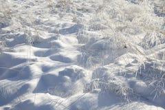 Snö och djupfryst dekorativt gräs royaltyfri bild