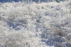 Snö och djupfryst dekorativt gräs royaltyfri foto