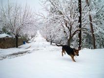 Snö och hund i Baix Penedes Tarragona Montmell arkivfoto