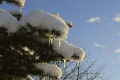 Snö och istappar Royaltyfria Bilder