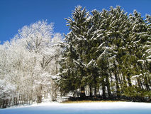 Snö och mindre så Arkivbild