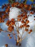 Snö och pinnar Arkivbild