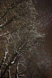 Snö och träd Arkivfoto