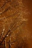 Snö och träd Royaltyfri Foto
