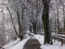 Snö och träd i vintern fotografering för bildbyråer