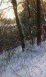 Snö och träd i vintern royaltyfria bilder