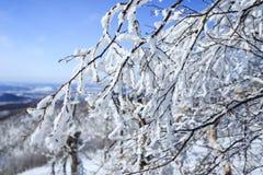 Snö- och trädfrunch Arkivbilder