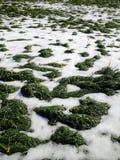 Snö på ängen Royaltyfri Fotografi