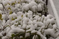Snö på det lilla staketet royaltyfri foto