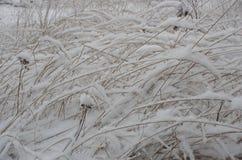 Snö på ett grässlut upp Arkivfoto