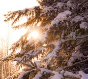 Snö på ett träd Arkivfoto