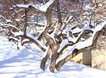 Snö på ett träd i vinter Royaltyfri Foto