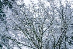 Snö på filialer och trådar arkivfoton