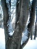 Snö på flera trädfilialer och stammar royaltyfri bild
