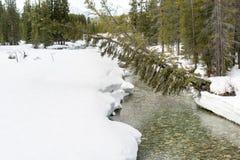 Snö på flodstrand royaltyfria bilder