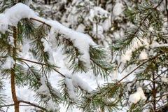Snö på grön prydlig filial Arkivbild