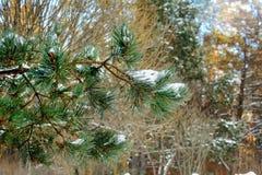 Snö på grön prydlig filial Arkivbilder