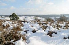 Snö på kullar i holländsk heathland Royaltyfri Bild