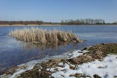 Snö på kusten av sjön och en rugge av vasser Horisont och blå himmel royaltyfri fotografi