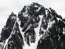 Snö på monteringen Rainier National Park In Winter arkivbild
