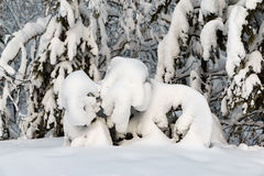 Snö på prydlig filial Royaltyfri Foto