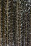 Snö på prydliga trädfilialer i träna på grå färger och en kall seger arkivbild