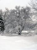 Snö på träd Royaltyfri Fotografi