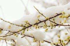 Snö på träden i vår Royaltyfria Bilder