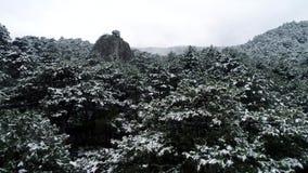 Snö på träden skjutit Bästa sikt på snö-täckte mörka barrskogar för prydlig skog Boreal barrskog lager videofilmer