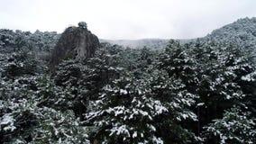 Snö på träden skjutit Bästa sikt på snö-täckte mörka barrskogar för prydlig skog Boreal barrskog stock video