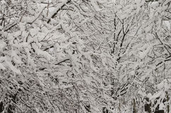Snö på trädet Arkivbild