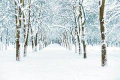 Snö parkerar med vita träd Royaltyfri Fotografi