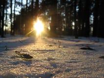 Snö skimrar som en spridning av diamanter royaltyfri foto