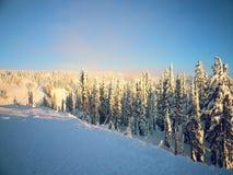 Snö + sol + träd = skönhet Arkivfoton