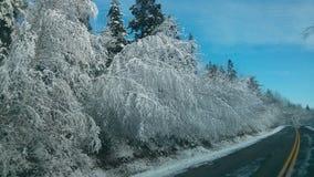Snö som draperar träd Arkivfoto