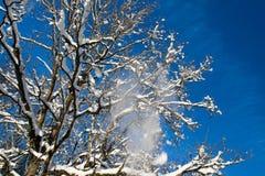 Snö som faller från träd Arkivfoto