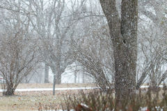 Snö som faller i grannskap Arkivbild