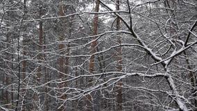 Snö som faller i ultrarapid i blandad skog arkivfilmer