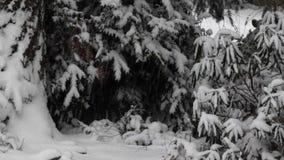 Snö som faller på Stillahavs- nordvästliga buskar i skog lager videofilmer
