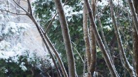 Snö som faller under snöstorm på trädgård stock video