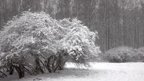 Snö som framme faller av skog arkivfilmer